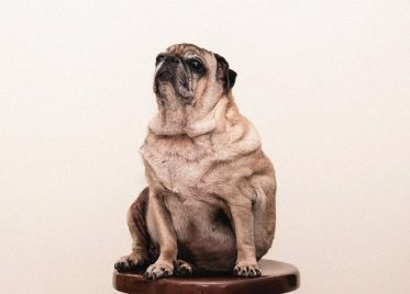Obesity and Diet in Pets