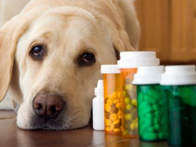 Veterinary Medication 101