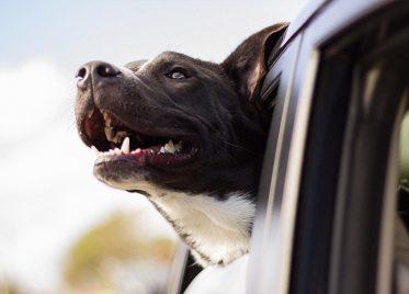 Pet Insurance Is It Worth It?